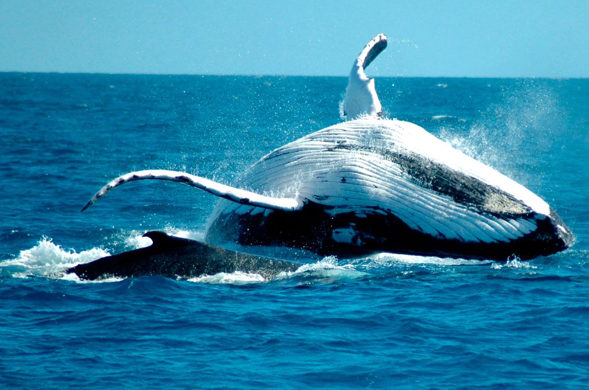 Dominikana, wieloryby, humbaki, Tropical Sun Tours