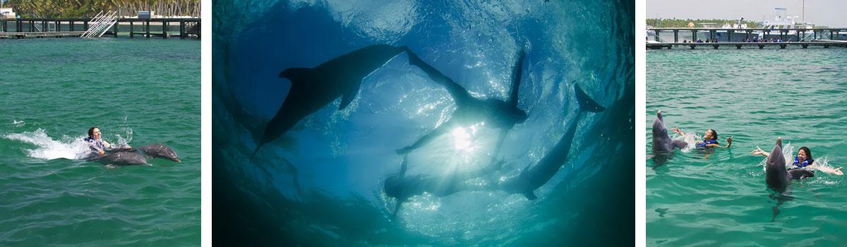 Dolphin Explorer - pływanie z delfinami - Dominikana