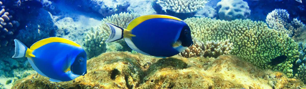 Katamaran - wybrzeże połud.-wsch. - Mauritius