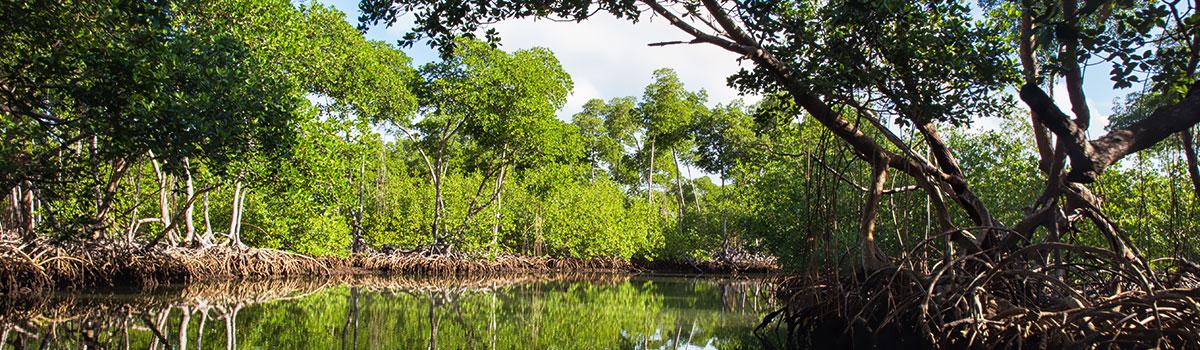 Czteropak - Samana, park Los Haitises, wodospad El Limon,wyspa Bacari