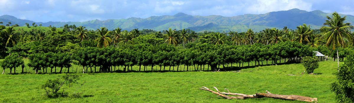 TRÓJPAK - Saona all inclusive, Santo, Adventure Dominicana Promocja - Dominikana Bayahibe