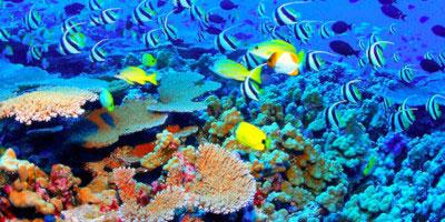 Tropical Sun Tours - Ekstremalna Dominikana. Przegląd wycieczek cz. 4