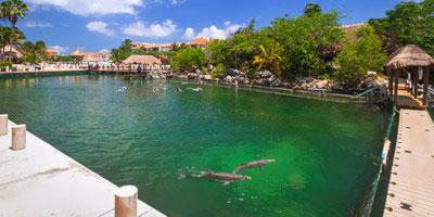 Tropical Sun Tours - Meksykańska przygoda z delfinami
