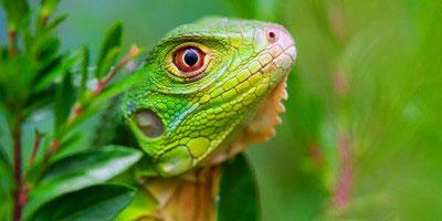 Tropical Sun Tours - Ciekawe fakty o Jamajce!