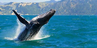 dominikana - wycieczka Wieloryby w zatoce Samana