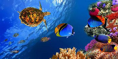 dominikana - wycieczka Nurkowanie na Dominikanie! Wyspa Catalina