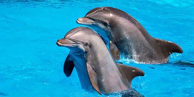dominikana - wycieczka Dolphin Explorer - pływanie z delfinami