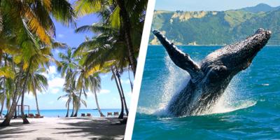 Dominikana - wycieczka DWUPAK SEZONOWY! Saona Luxury VIP i Wieloryby - BAYAHIBE