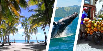 Dominikana - wycieczka TRÓJPAK SEZONOWY! Saona Luxury VIP, Wieloryby i Vida Dominicana - BAYAHIBE