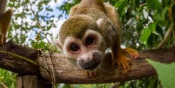 Dominikana - wycieczka Małpi Gaj z płw. Samana