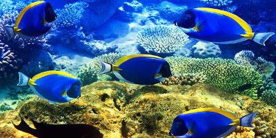 mauritius - wycieczka Katamaran - wyspa Gabriela