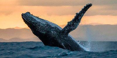 dominikana - wycieczka Wieloryby o wschodzie słońca